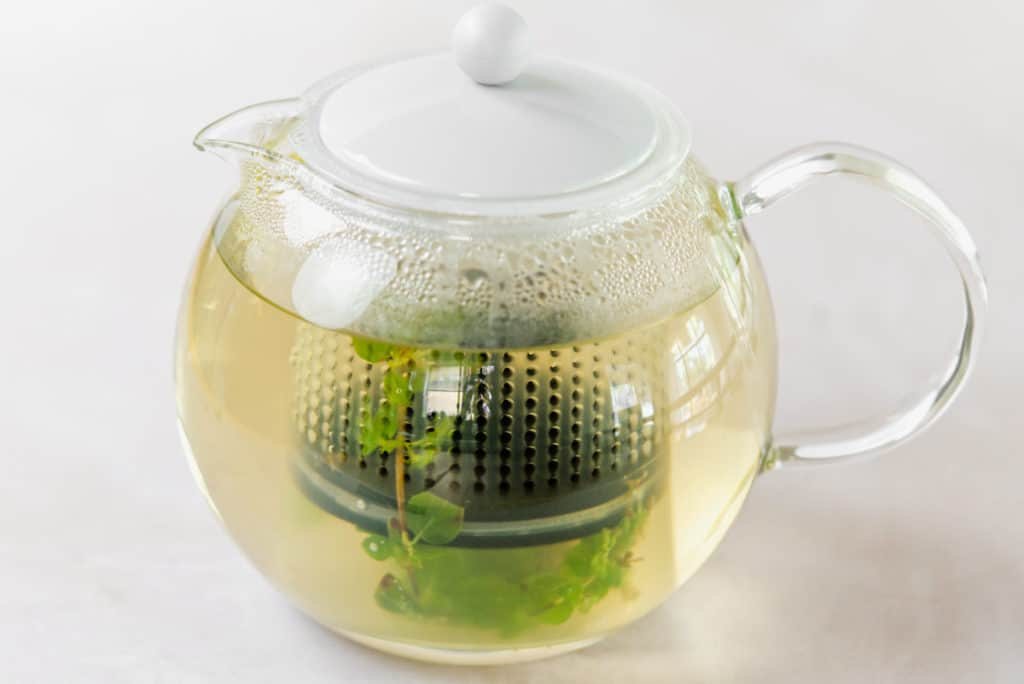 fresh pot of herbal tea