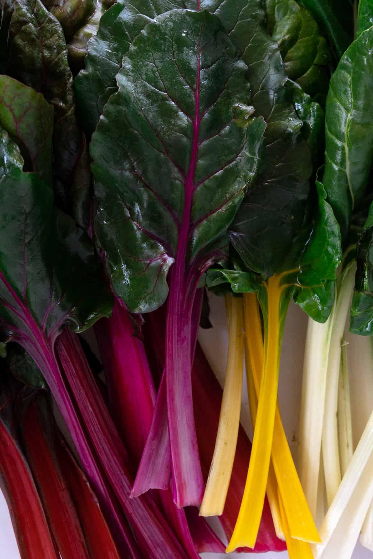 rainbow chard leaves with red, pink, yellow and white stalks